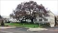 Image for Courthouse Elm - Roseburg, OR