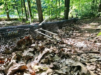 Plastic mesh drift fences guide the amphibians westward through the woodlands towards the tunnels for safe steps to their vernal breeding pools.
