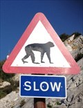 Image for Watch out for the monkeys../..Gibraltar