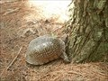 Image for Eastern Box Turtle at Rock Springs Bike Trail - Macon Co., IL