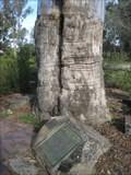 Image for Hovell Tree - Albury, NSW, Australia