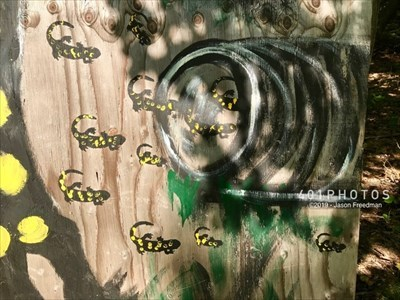 DETAIL: Hand-painted sign showing spotted salamanders entering the tunnel