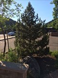Image for Eisenhower Green Ash Tree - Morrison, CO