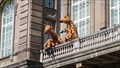 Image for Socialising Giraffes - Finnish Museum of Natural History - Helsinki, Finland