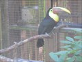 Image for Aviary- Central Florida Zoo, Sanford, FL