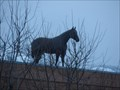 Image for Spanish Fork's Roof-top Horse