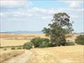 Image for Eucalipto da Gramacha
