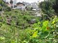 Image for Fort Mason Community Garden - San Francisco, CA