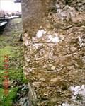Image for Llanallgo, Eglwys Sant Allgo