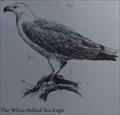 Image for Sea Eagle Lookout - Lake Macquarie, NSW, Australia