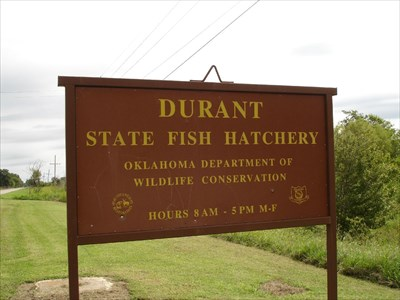 durant state fish hatchery durant oklahoma fish