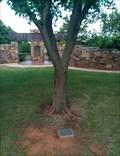 Image for Survivor Tree - Mitch Park, Edmond, Oklahoma