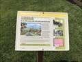 Image for Suburban Saddleback - Lake Forest, CA
