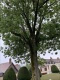 Image for L'arbre de la liberté - Sézanne - France