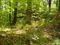 Image for TB 2116-14.0 Cerný les