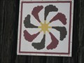Image for German Pinwheel at Fudge Farm - Surgoinsville,TN