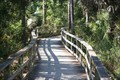 Image for Boardwalk, Scorkscrew Swamp Sanctuary, Naples, Florida