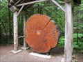 Image for Ohanapecosh Tree Ring Display - Mt. Rainier National Park