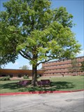 Image for Southern Nazarene University Shoe Tree - Bethany, OK