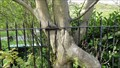 Image for Tree Eating Metal Fence– Hebden Bridge, UK