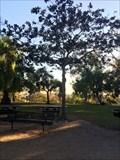 Image for Magnolia Grandiflora - Costa Mesa, CA