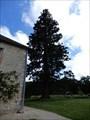 Image for Sequoia Geant Jardin Botanique Universitaire Poitiers,France