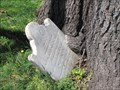 Image for Tree-eating Catherine Walker grave stone - Fredericksburg, VA