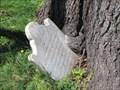 Image for Tree-eating Catherine Walker grave stone - Fredericksburg, VA