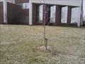 Image for Betty Marty - MSSU Campus - Joplin MO