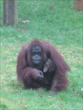 Image for Monkey World - Longthorns, Wareham, Dorset, UK