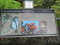 Image for Sounds of the Rain Forest - Thurston Lava Tube trail, Big Island, HI