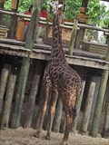 Image for Feed the Giraffe - Brevard Zoo – Melbourne, FL