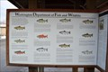 Image for Salmons and Trouts - Shelton, WA