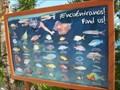 Image for Tropical Fish - Xel-ha, Mexico