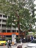 Image for The Bhodhi Court—Thammasat University, Bangkok, Thailand