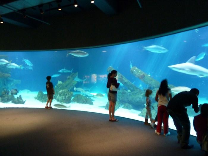 ... public aquariums waymark albuquerque biopark aquarium albuquerque new