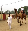 Image for National Research Centre on Camel - Bikaner, India
