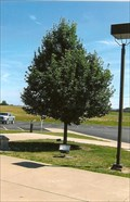 Image for Chris Fennewald Tree - Sacred Heart Church - Troy, MO