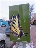Image for Canadian Tiger Swallowtail Butterfly - Ottawa, Ontario