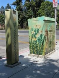 Honeybees, Pair of Boxes, San Jose, CA
