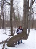 Image for Silver Lake Trail Tree - Silver Lake State Park, New York