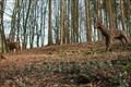 Image for Deer Sculptures - Rode Hall, Scholar Green, Cheshire,UK.