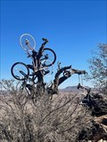 Image for The Bicycle Tree