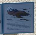 Image for Sea Otter  -  Pebble Beach, CA