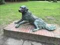 Image for Liegender Hund im Stadtpark - Hamburg, Germany