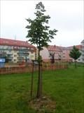 Image for The tree of liberty - Nový Bydžov, Czech Republic