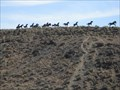 """Image for """"Grandfather Cuts Loose the Ponies"""" - Vantage, Washington"""