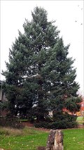 Image for Apollo 14 Moon Tree - Oregon State University - Corvallis, OR