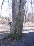 Image for Arlington Co 2006 Champ Swamp White Oak