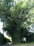 Image for The Honour Oak